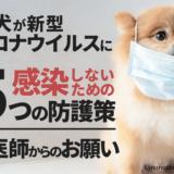愛犬が新型コロナウイルスに感染しないための5つの防護策