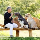 シーザーミランの番組から「犬のしつけ方」を考える|注意点も!