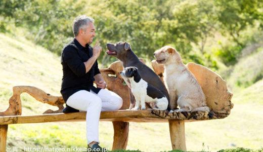 【ドックトレーナー監修】シーザーミランの番組から「犬のしつけ方」を考える|注意点も!