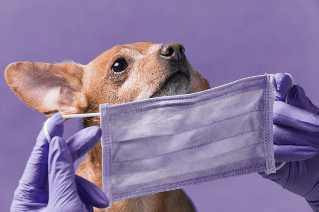 新型コロナウイルスが犬に感染?!香港で飼い主から犬へ感染か?