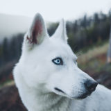 「犬を暴力でしつけること」について獣医師が声明を出しています