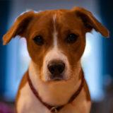 犬を暴力でしつけるのがダメな理由は?|「痛くない体罰」がある?