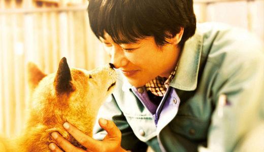【ヒューマンドラマ】おすすめ映画犬と人間の感動物語を描く『ひまわりと子犬の7日間』