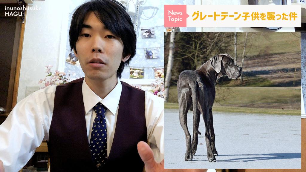 【グレートデーン】グレートデン 犬が子供を襲ったニュースについて。 危険性は? 赤ちゃん 噛まれる 事件 を考察する