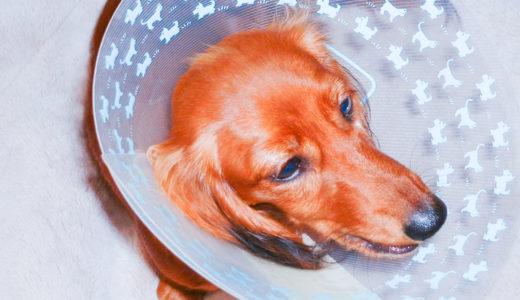 犬のエリザベスカラーは「ストレス源だけどほぼ必須」です