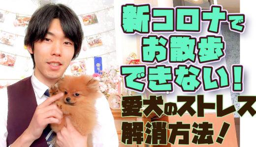 【動画で説明】新型コロナ対策!室内で出来る犬の運動・ストレス解消法3選
