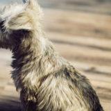 フローリングに敷くカーペットの選び方|犬を安全に飼うために