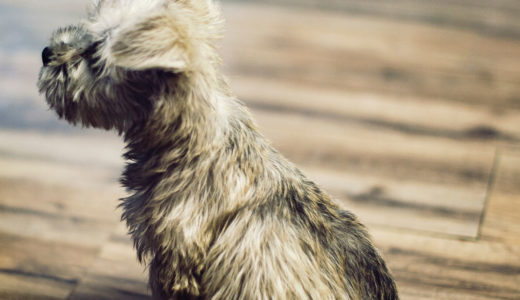 フローリングの床で犬を飼うリスクと対策をご紹介