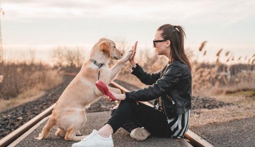 犬のしつけがうまくいかない飼い主が見落としがちな6つのこと