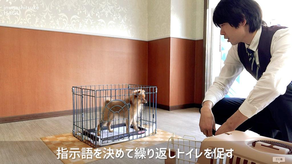 【実践動画有り】新型コロナでお散歩出来なくても安心!犬の室内トイレトレーニング【初心者向け】