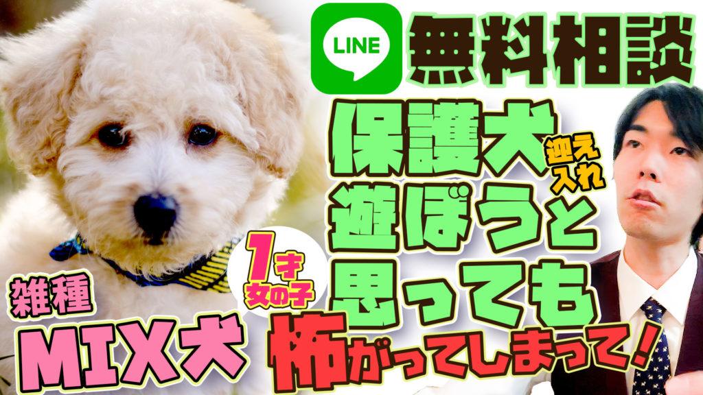 【雑種:保護犬】ほとんど動かず便秘気味・臆病でなつかない