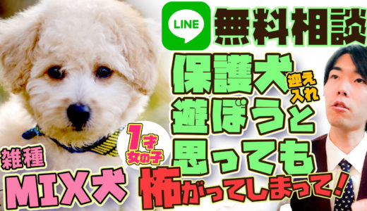 【雑種:保護犬】ほとんど動かず便秘気味・臆病でなつかない【LINE 犬の無料相談】
