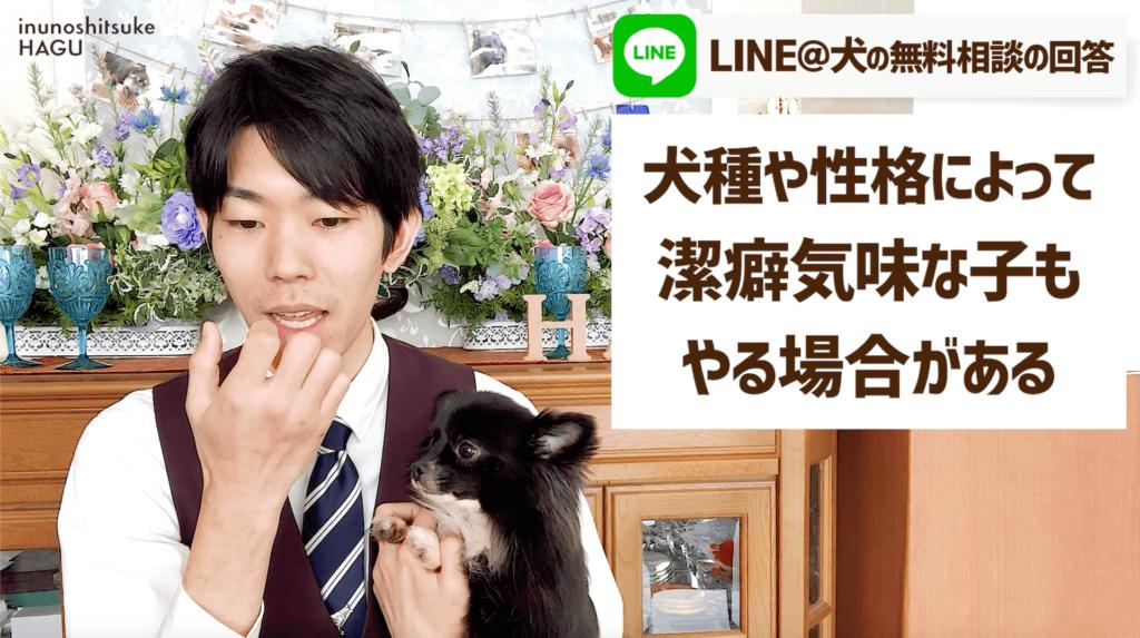 【自傷行為】MIX犬(トイプードル×ポメラニアン) 4歳 メス 潔癖な性格の犬に多い!【飼い主が気をつけるべきこと】