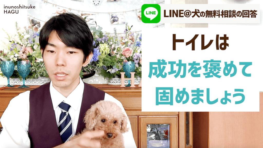 【失敗】MIX犬(ペキニーズ×トイプードル) 6ヵ月 オス 寝床で粗相をしてしまう! 犬がクッションで排せつをする意外な理由とは?トイレを成功へ導く方法