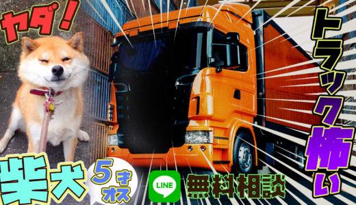 【柴犬】 5歳11ヶ月 オス お散歩時トラックが苦手になった!同じ散歩道を同じように歩いて欲しい!!