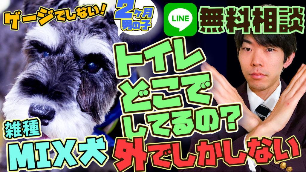 MIX犬シュナプー(ミニチュアシュナウザー×トイプードル)トイレを長時間我慢してしまうので心配
