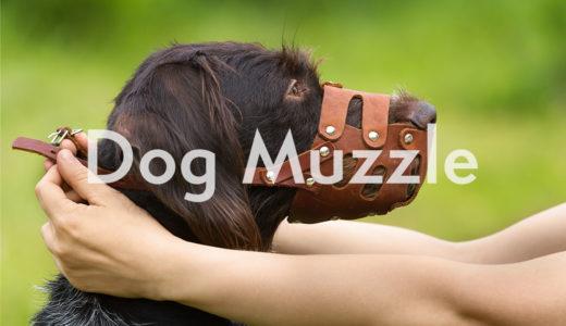 犬の口輪(マズル)の使い方!正しいサイズの測り方と種類