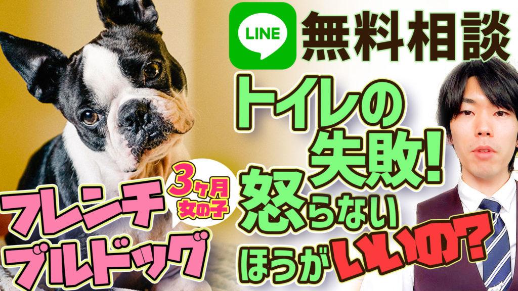 【初心者必見!】フレンチブルドッグ 3ヶ月 LINE無料相談犬のしつけは怒らない方がいいの?怒ると叱るの違いについて