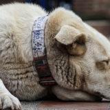 犬の元気がなくなったら病気を疑うべき?食欲低下は病気のサイン?