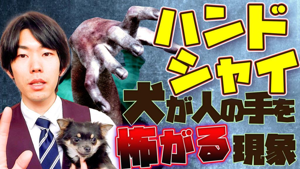 犬が人間の手を怖がる?!攻撃してくる?!「ハンドシャイ」とは?