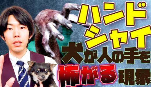 【ドッグトレーナー考察】犬が人間の手を怖がる?!攻撃してくる?!「ハンドシャイ」とは?