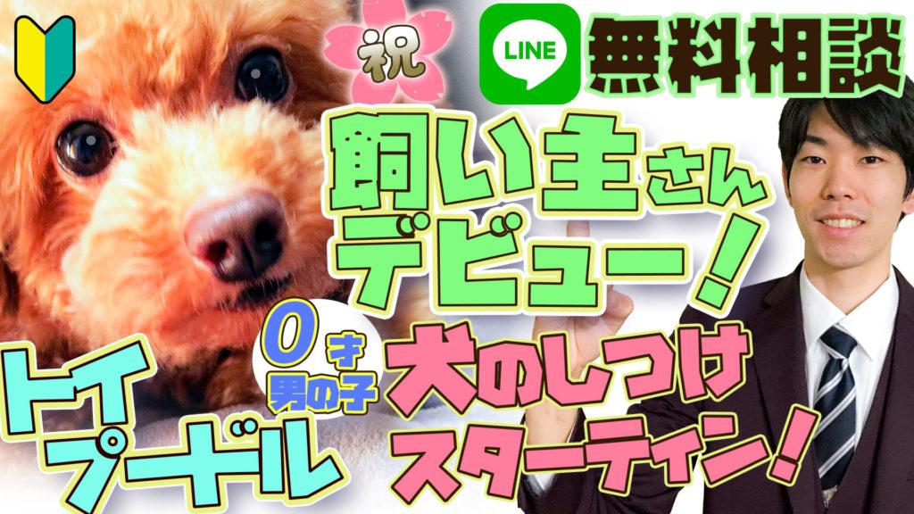 【トイプードル】0歳オス 初めての犬!どうやってしつければいいの? 甘噛み・吠え癖・トイレトレーニング