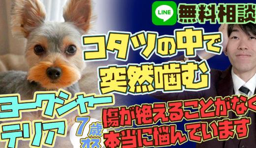 【突然噛む】ヨークシャーテリア 犬は狭い場所では強気になる?!こたつの中で噛む犬の対処法