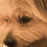 犬が下痢になったら飼い主はどう対応すべき?獣医に診せるべき?