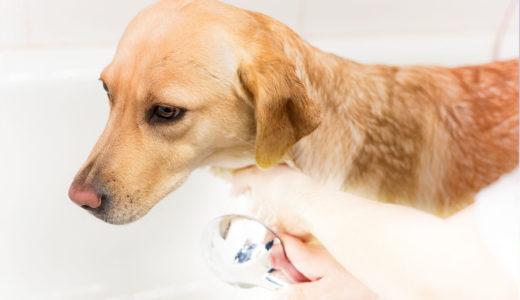 犬をお風呂に入れる際に気を付けるべきことは?温度は?