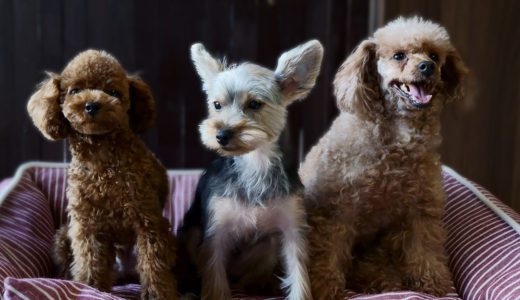 保護犬【支援物資・募金】ご報告