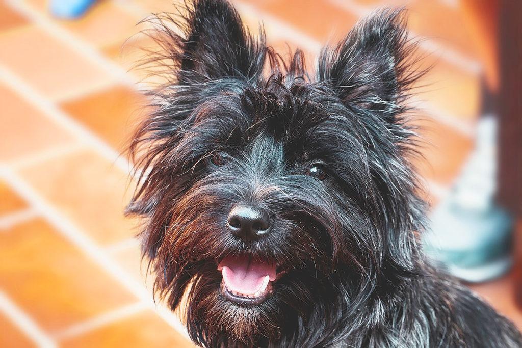 犬の涙やけを改善するには?|タンパク質にも注目しましょう