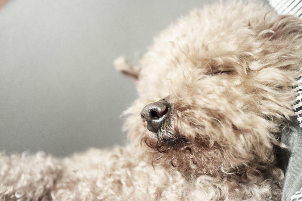 ペットの介護の為に仕事を辞めるべき?仕事と介護の両立は可能?