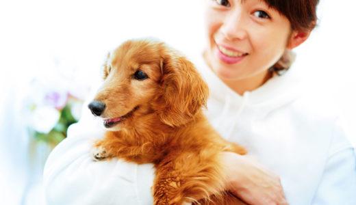 動物介護士ってどんな仕事?必要な資格や活躍できる場所とは?【犬のお仕事】