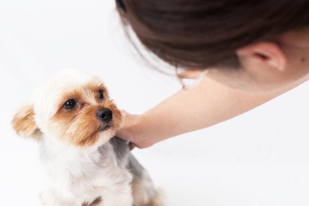 動物介護士になりたい!!資格取得は難しい?簡単?(パート1)