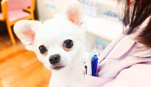 動物介護士になりたい!資格取得は難しい?簡単?(パート2)資格を取る2つの方法