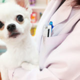 動物介護士になるための講座内容を比較!