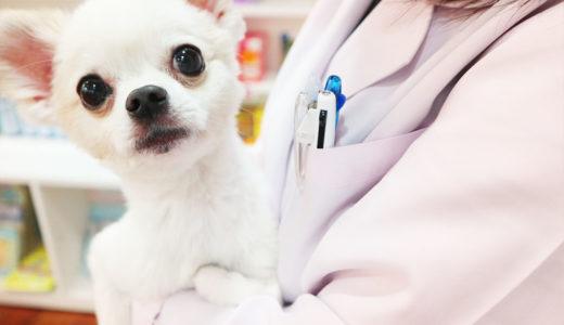 ペットの高齢化【人気のお仕事】動物介護士になるためのおすすめの通信講座内容を比較!