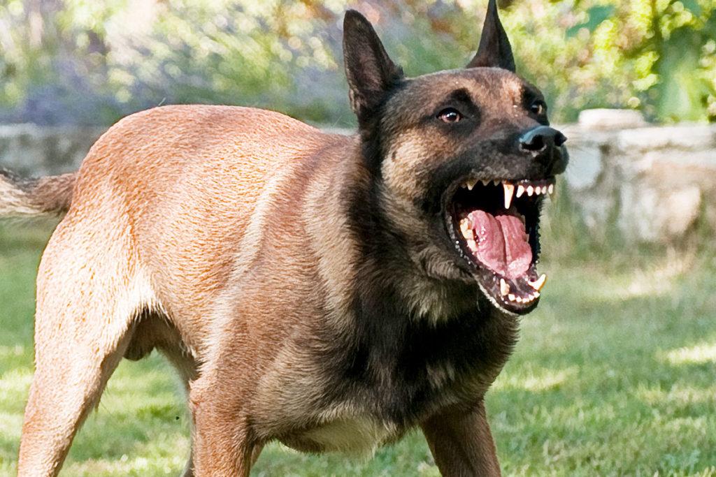 コロナよりも恐ろしい?!狂犬病の犬に咬まれた男性が死亡!狂犬病とは?