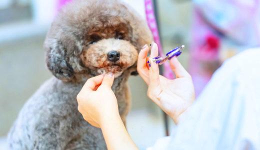 犬のトリミング料金はいくら?犬種によって値段に違いはあるの?