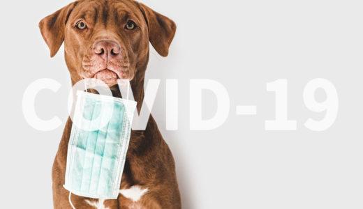 日本国内初!新型コロナウイルスに犬が感染!2匹の犬に陽性反応