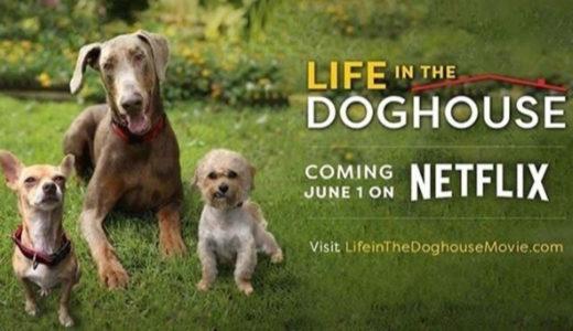 おすすめ【犬のドキュメンタリー映画】『1万匹の犬を救った奇跡の家』: あらすじ