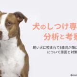 【犬のしつけ専門家の分析と考察】飼い犬に咬まれて6歳児が顔に大ケガ!生まれた時から飼っていた犬が豹変?!