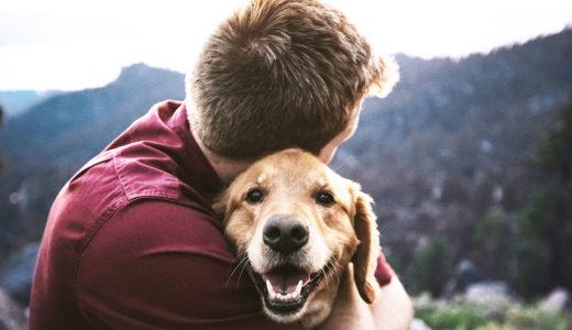 【はじめて犬を飼う】「犬の十戒」をまだご存知でない方へ