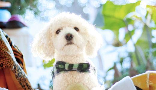 トイプードルなどの犬が唸る・噛む原因は色々!対処方法は?