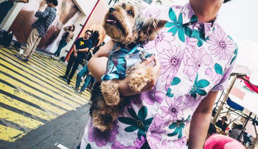 犬の抱っこのコツを徹底紹介!|抱っこの頻度はテキトーがいい!?