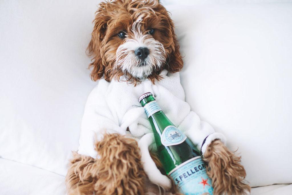 犬に炭酸水を飲ませると何かいいことがあるの?デメリットは?