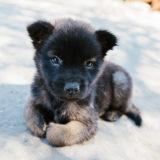 【ドッグトレーナー監修】子犬のしつけのポイントは?|成犬になる前に取り組むべきことは?