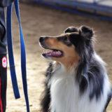 【ドッグトレーナ―の選び方!】犬のしつけの専門家を選ぶポイント5つ