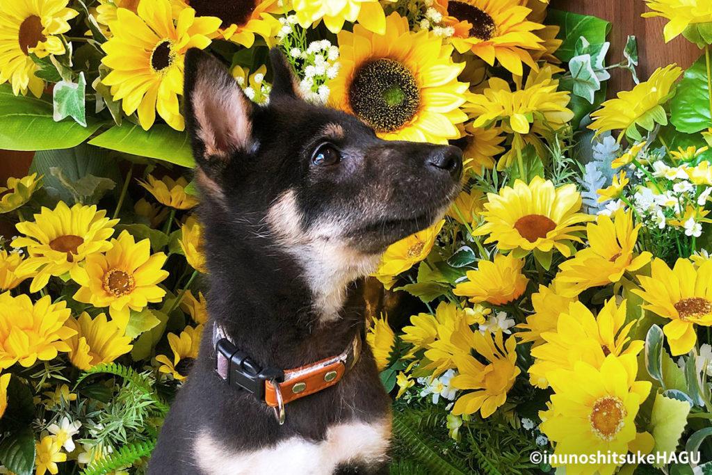犬の目やには病気のサイン?犬の目やにの原因と対処方法
