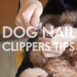 【ドッグトレーナー監修】犬の爪切りのコツ|頻度・出血対策・楽に切るポイントなど